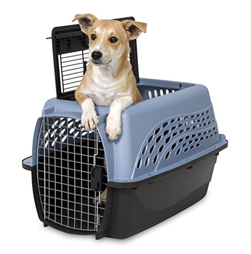 top 10 best dog carrier for mans best friend