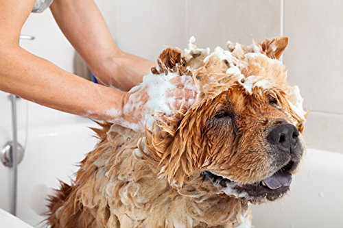 top 10 best flea treatment for dogs to get rid of unwanted guests